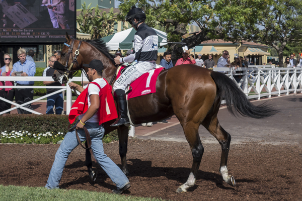 FEROCIOUS in the paddock at Santa Anita. (GVL photo)