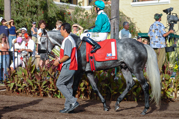 RUNAWAY DANCER in the paddock at Del Mar (GVL photo)