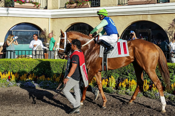 KENJISSTORM in the paddock at Del Mar (GVL photo)