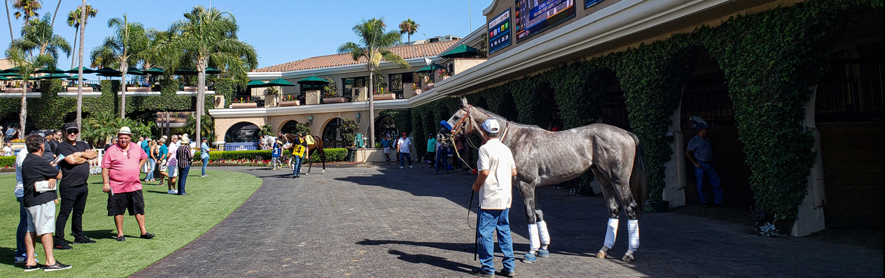 AMERICAN THEOREM schooling in the Del Mar paddock the day before his first start.